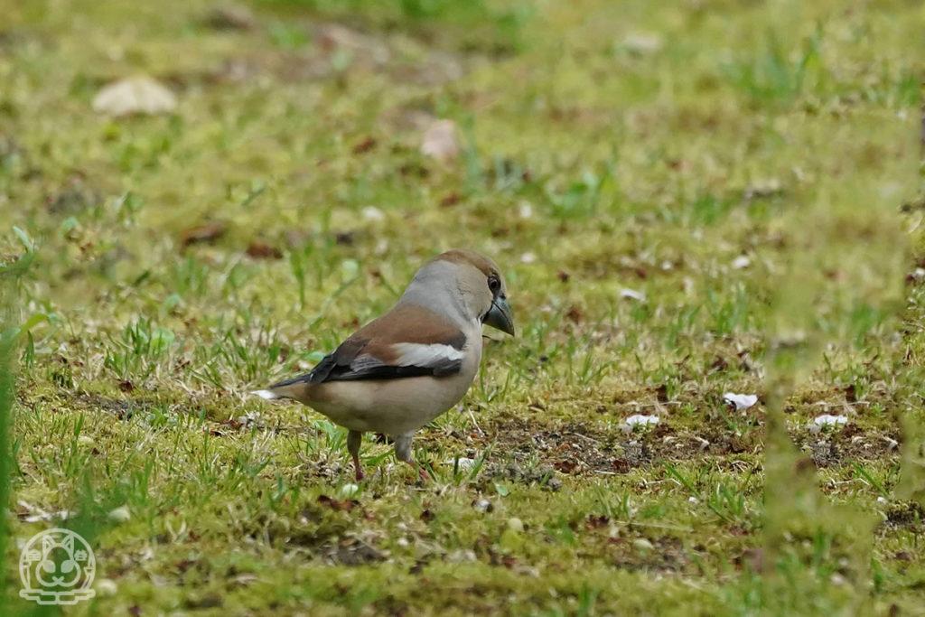縮景園の野鳥