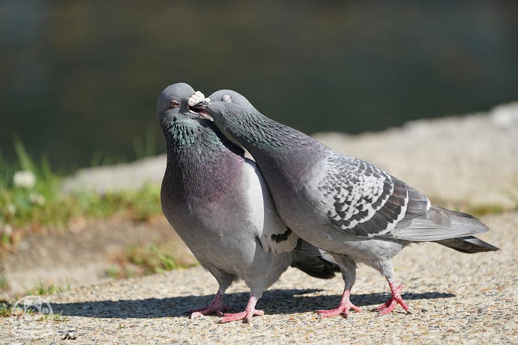 広島城の恋は実らず