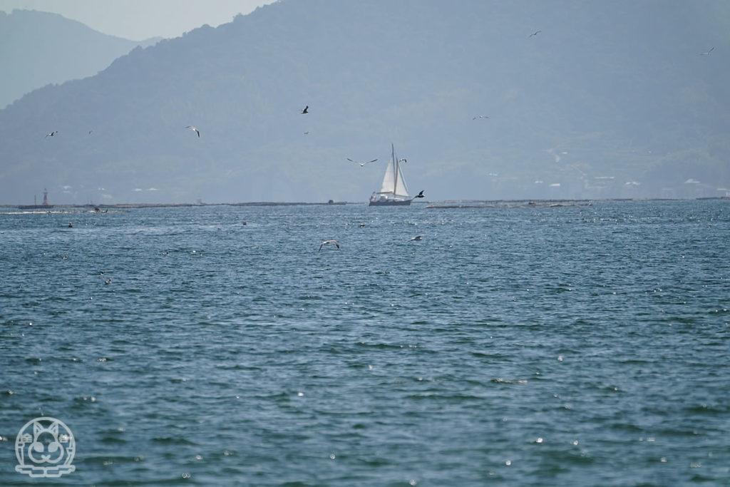 カモメとヨット