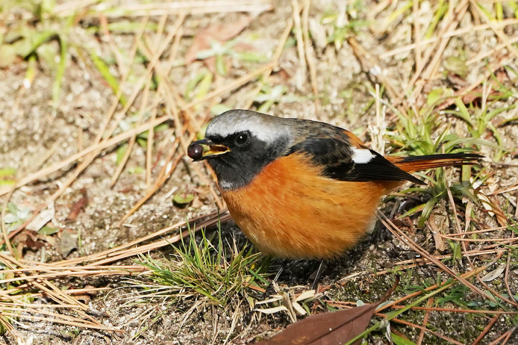 縮景園の野鳥2020.01