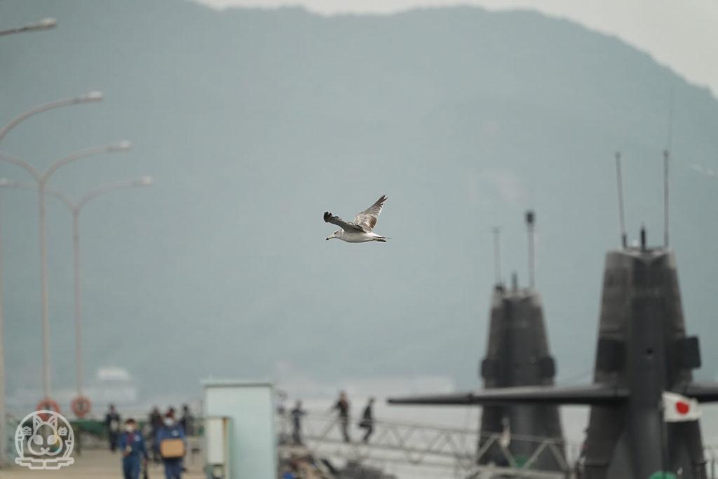 カモメと潜水艦