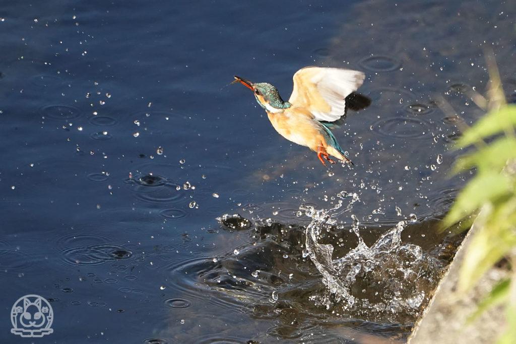 川に飛び込むのはまだ怖いね