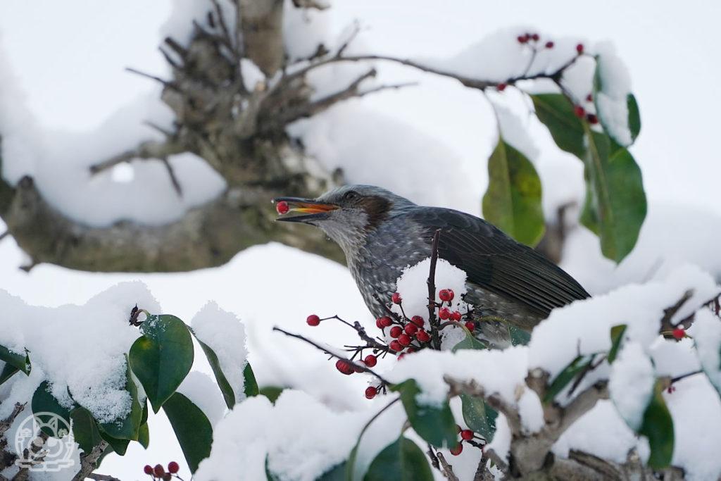 雪の日の野鳥