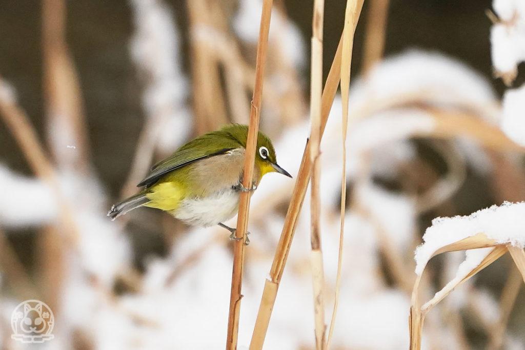 雪の日に川へ野鳥を撮りに行ってきました